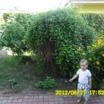 sziklakert helye az ifjú kertésszel :)