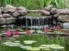 home_garden_pond